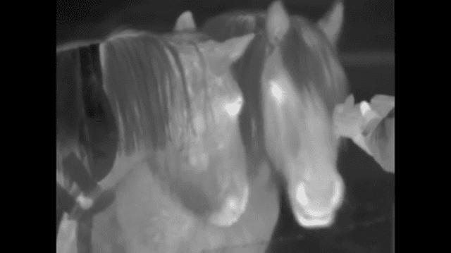Horses saying hello