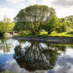 Picture taken just outside Dalbeattie with the Urr river reflecting this imposing tree
