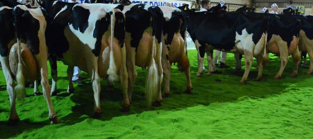 BBC Disclosure Dark Side Dairy