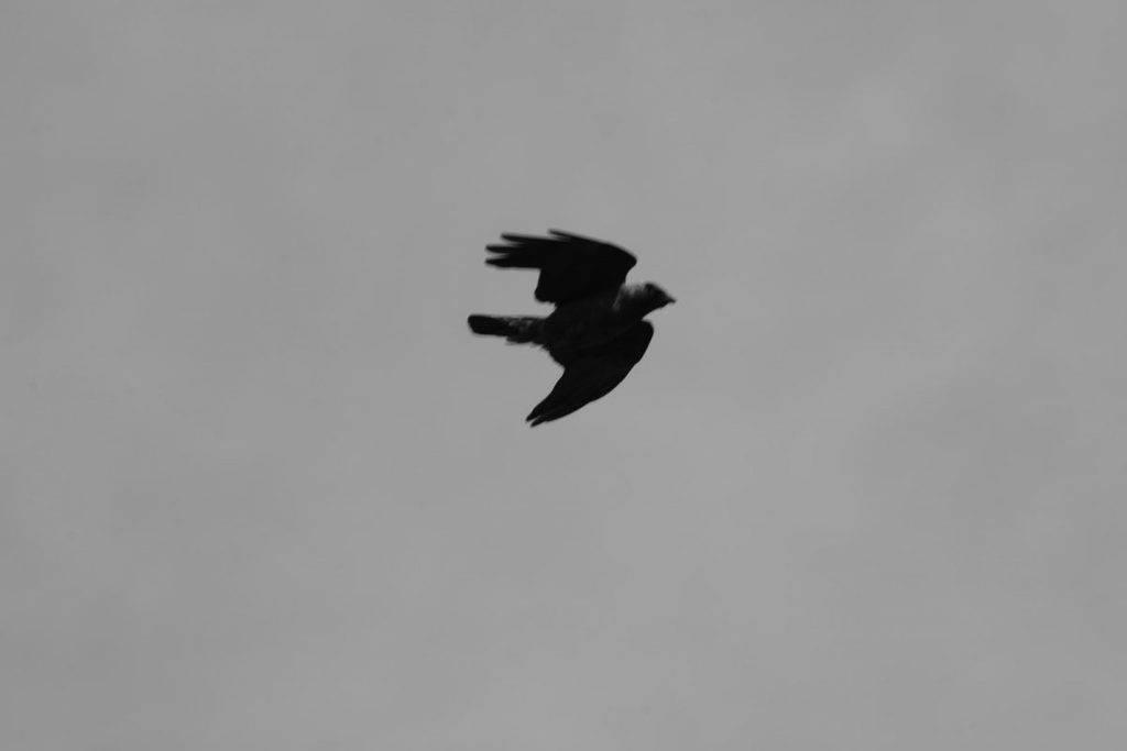 Scottish Natural Heritage Launch Wild Bird Control General