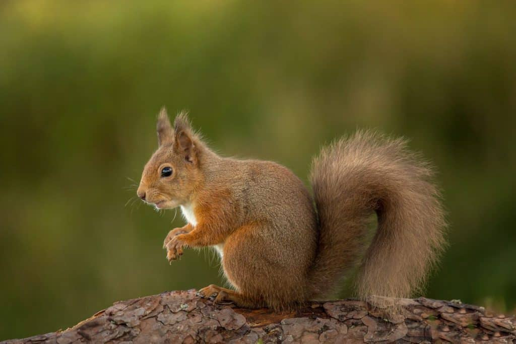 Almost 1000 squirrel sightings reported
