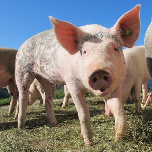 survey asks farmers' views animal welfare