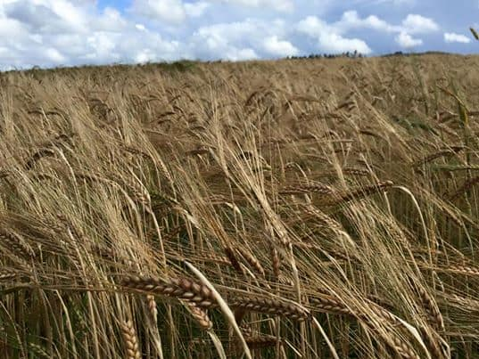 SCOTLAND'S ARABLE FARMERS MAP OUT PRIORITIES AS NATION PREPARES TO RESET, RESTART AND RECOVER