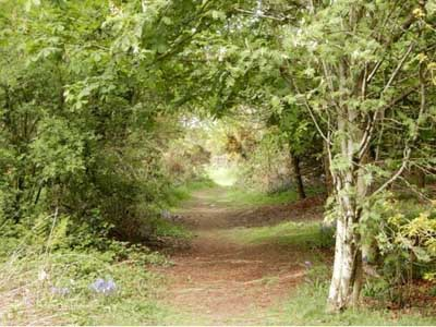 .Improvements Planned for Crossmichael Community Woodland Walk