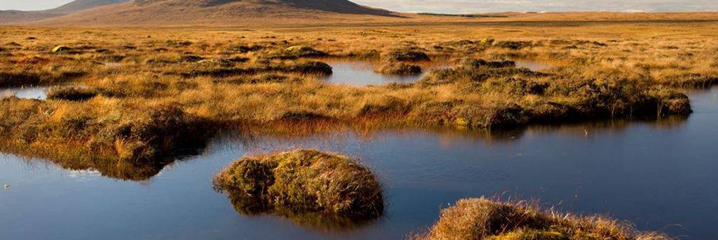 Nature's recovery is crucial to Scotland's recovery