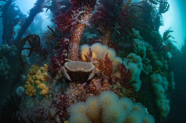 New Funding Announced for community marine surveys