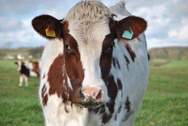 UK consumers consider environmental impact when buying food