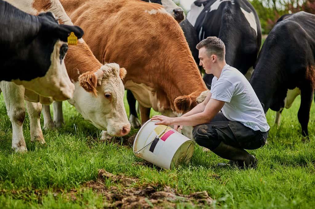 Livestock farmers face higher risk of injury