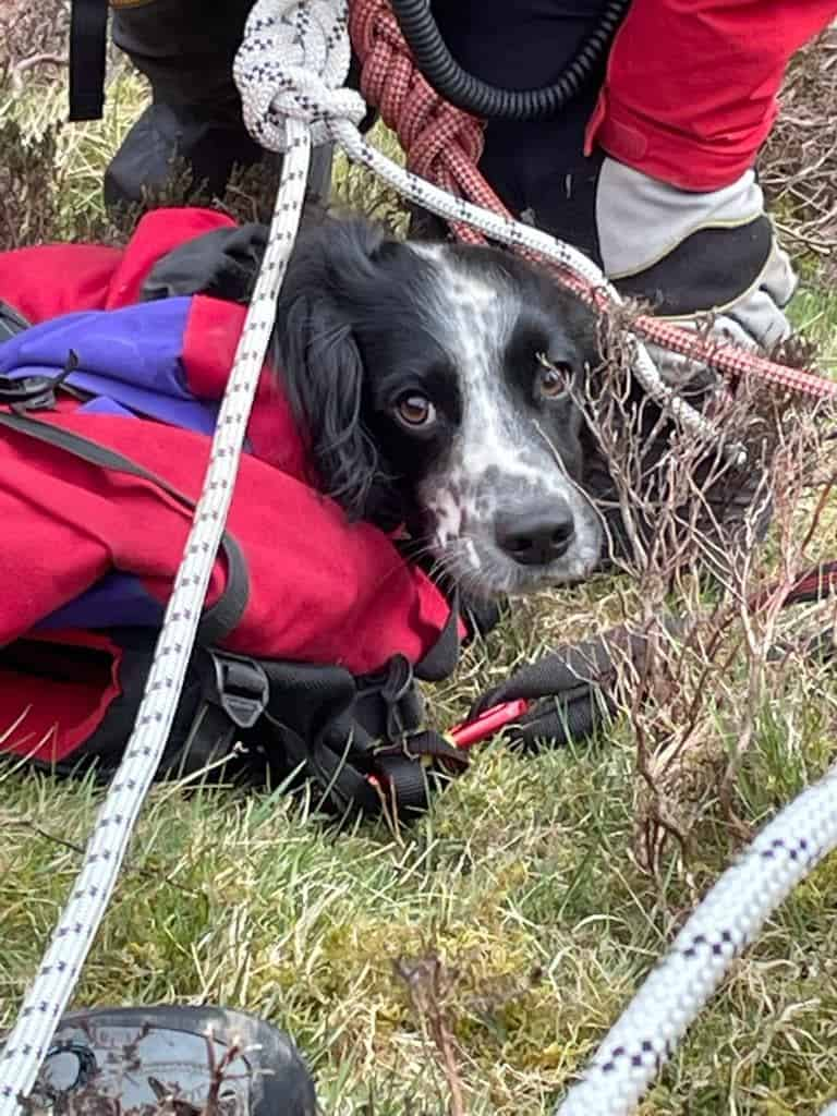 Louis the Springer Puppy Saved by Moffat Mountain Rescue After 300 Feet Fall