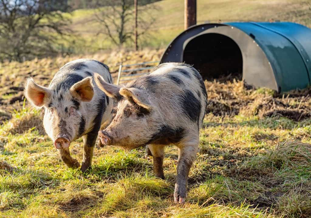 Health is the most important factor for wellbeing in animals