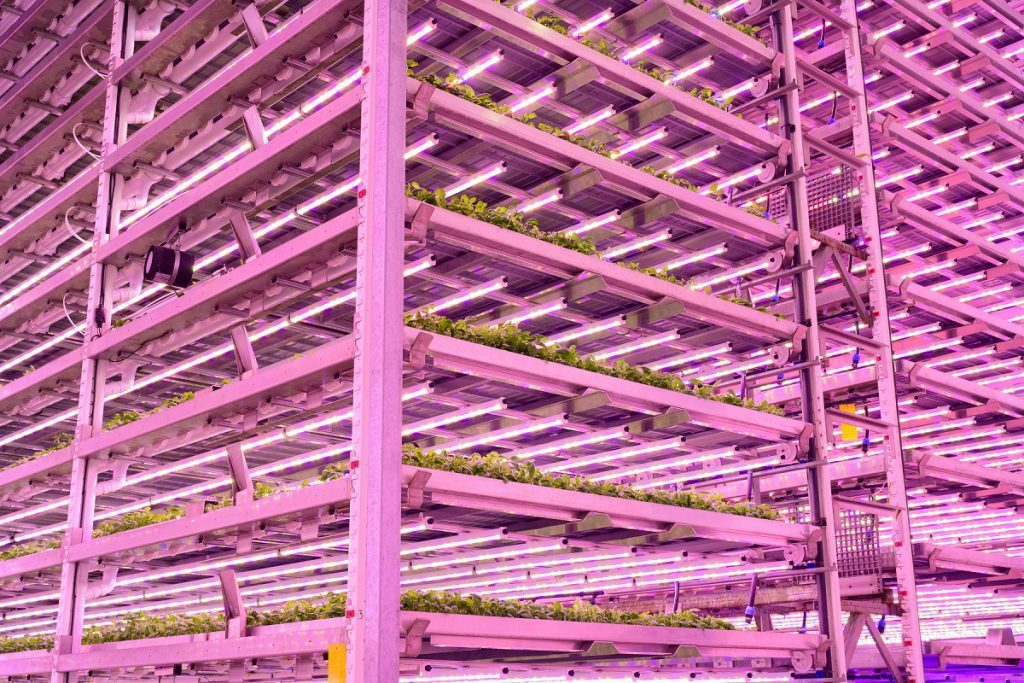 Novel vertical farm to accelerate skills, research and innovation