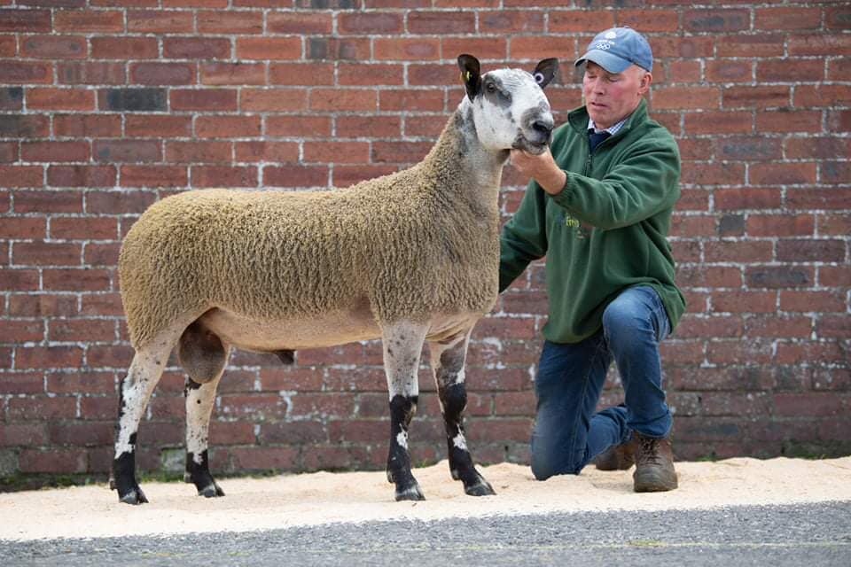 BOB'S TOP OF THE TUPS AT WALLETS BLUEFACED LEICESTER RAMS SALE
