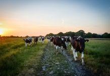 Farmers' handbook highlights need to address climate change